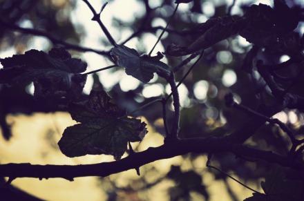 © Photograph by Elysia Allsopp